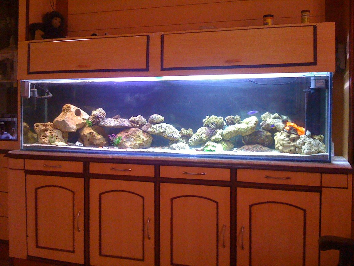 100 gallons saltwater fish tank (mostly fish, little/no live coral) - New setup