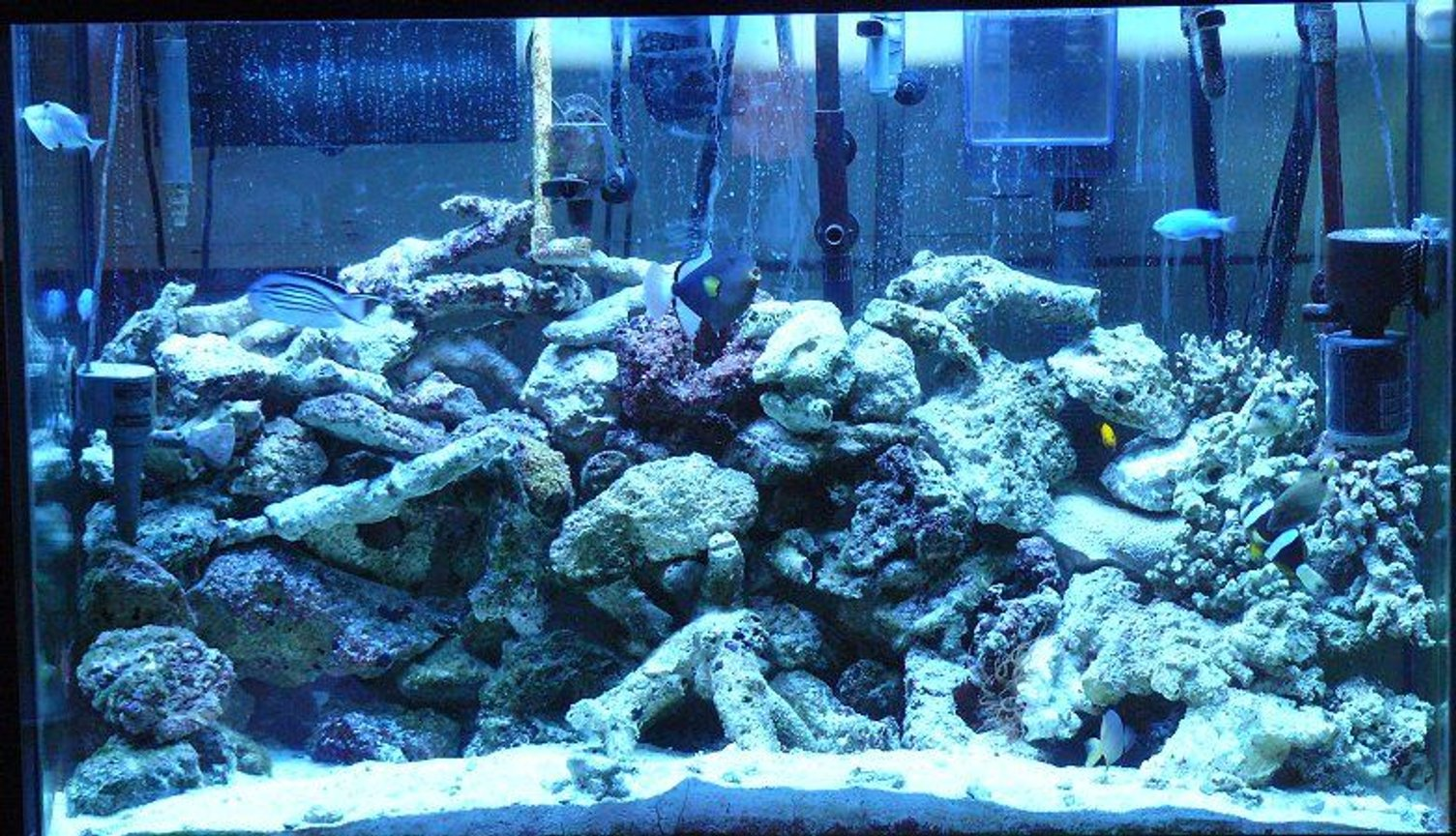 110 gallons saltwater fish tank (mostly fish, little/no live coral) - Marine Aquarium