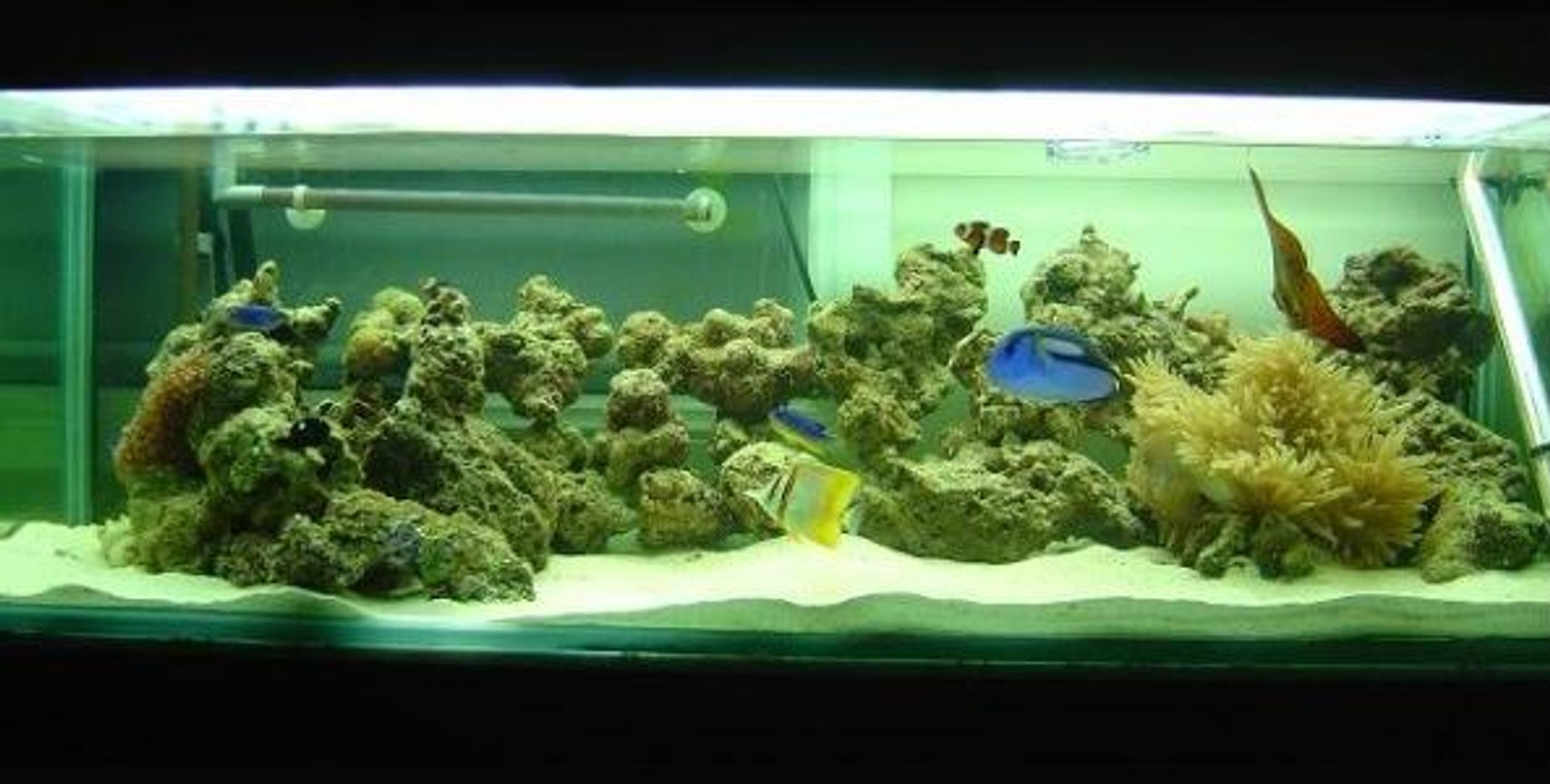 saltwater fish tank (mostly fish, little/no live coral) - Front shot