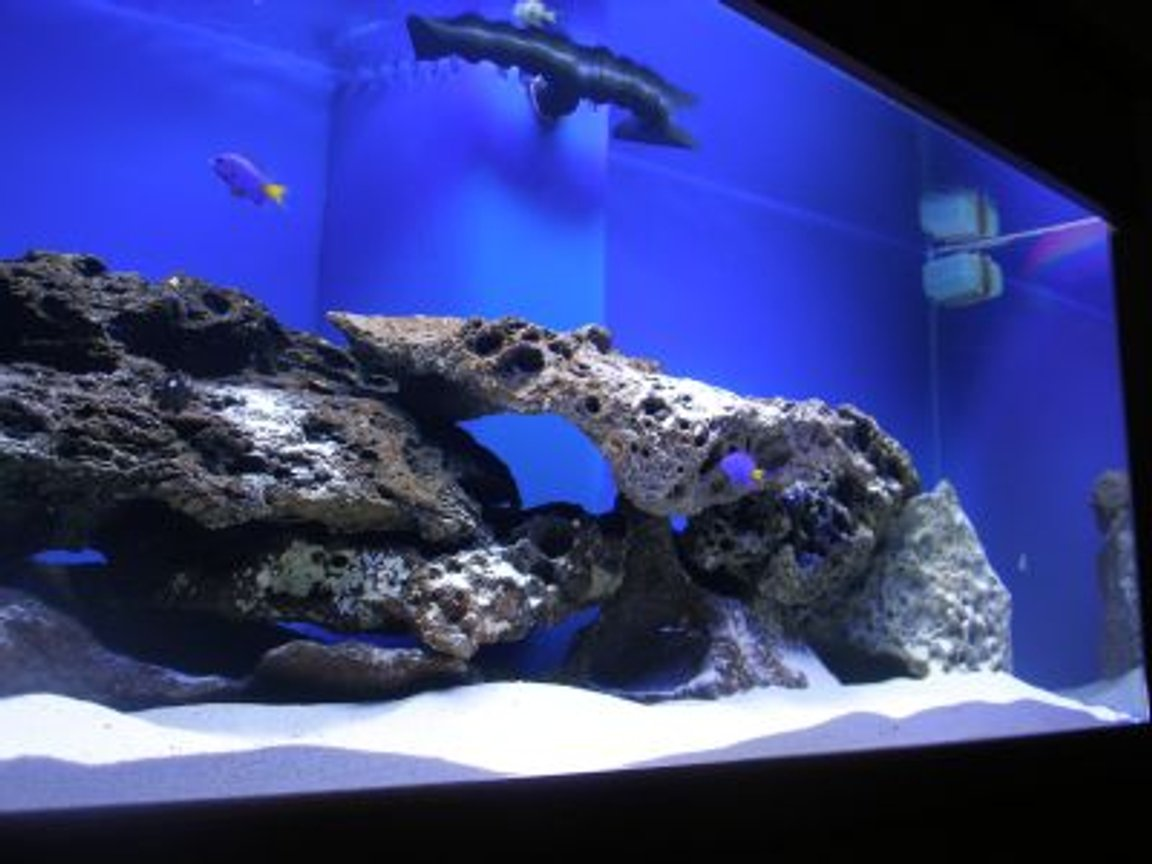 75 gallons saltwater fish tank (mostly fish, little/no live coral) - 75 gal. FO tank