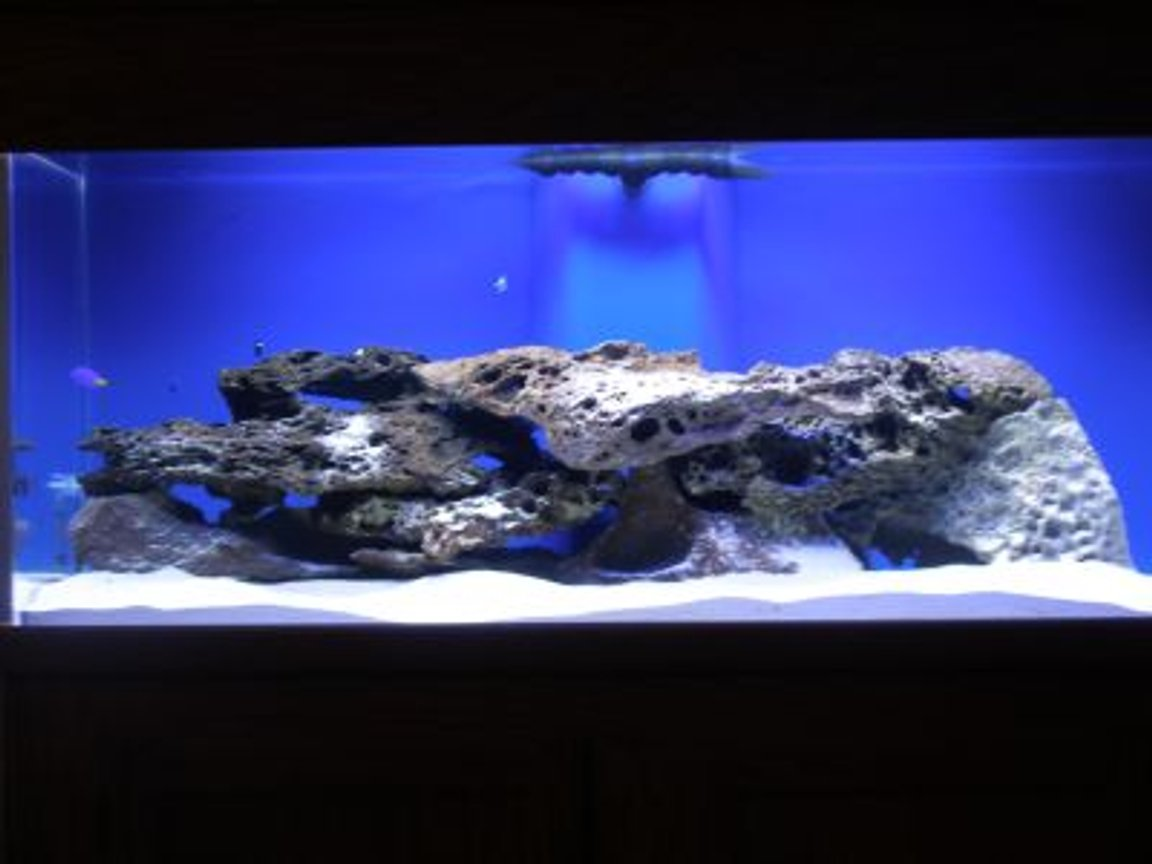 75 gallons saltwater fish tank (mostly fish, little/no live coral) - 75gal FO tank
