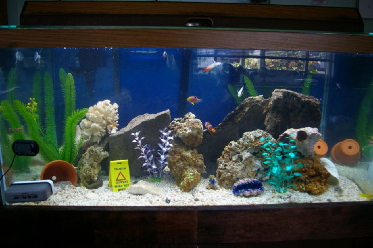 40 gallons saltwater fish tank (mostly fish, little/no live coral) - full tank pic now look how bright it is.