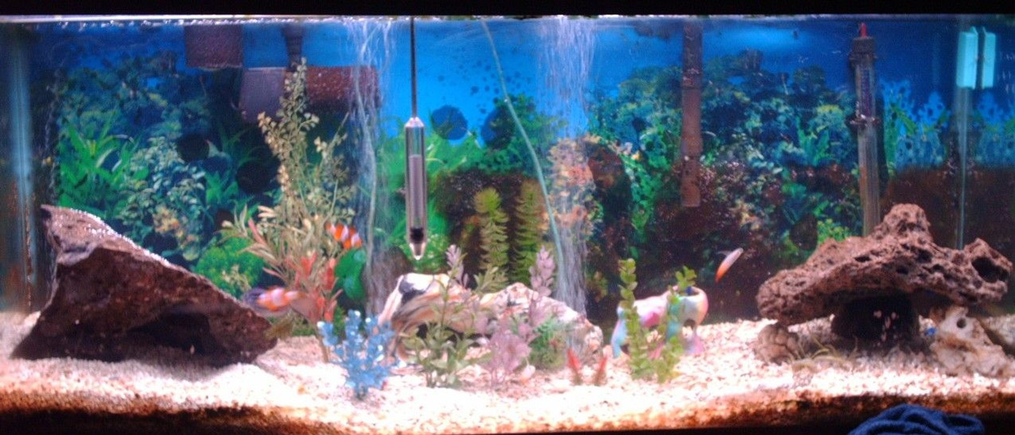 75 gallons saltwater fish tank (mostly fish, little/no live coral) - this is my favorite pic.