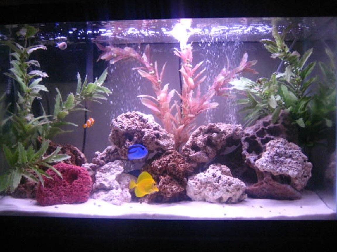30 gallons saltwater fish tank (mostly fish, little/no live coral) - 30 gl saltwater