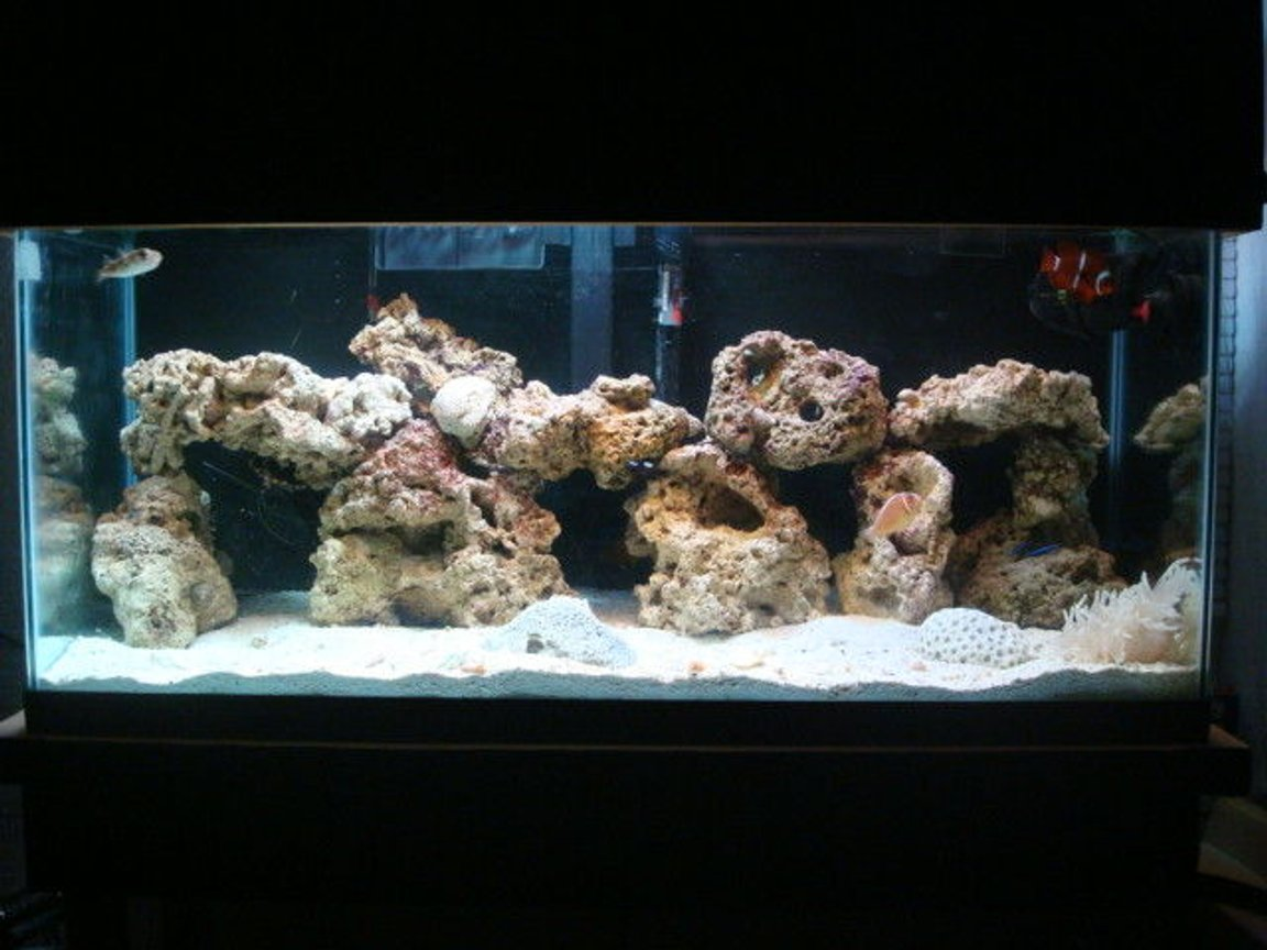 29 gallons saltwater fish tank (mostly fish, little/no live coral) - done