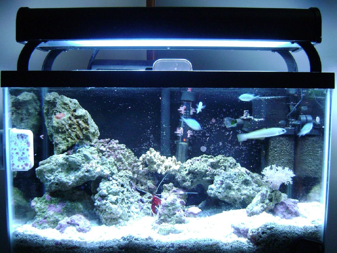 10 gallons saltwater fish tank (mostly fish, little/no live coral) - 10 gallon with 45 watt 50/50 lighting, 4 chromis, bar gobie, yellow watchman gobie, green mandarin, pistol shrimp, fire shrimp, anenome crab, for corals pulsing xenia, 1 little mushroom