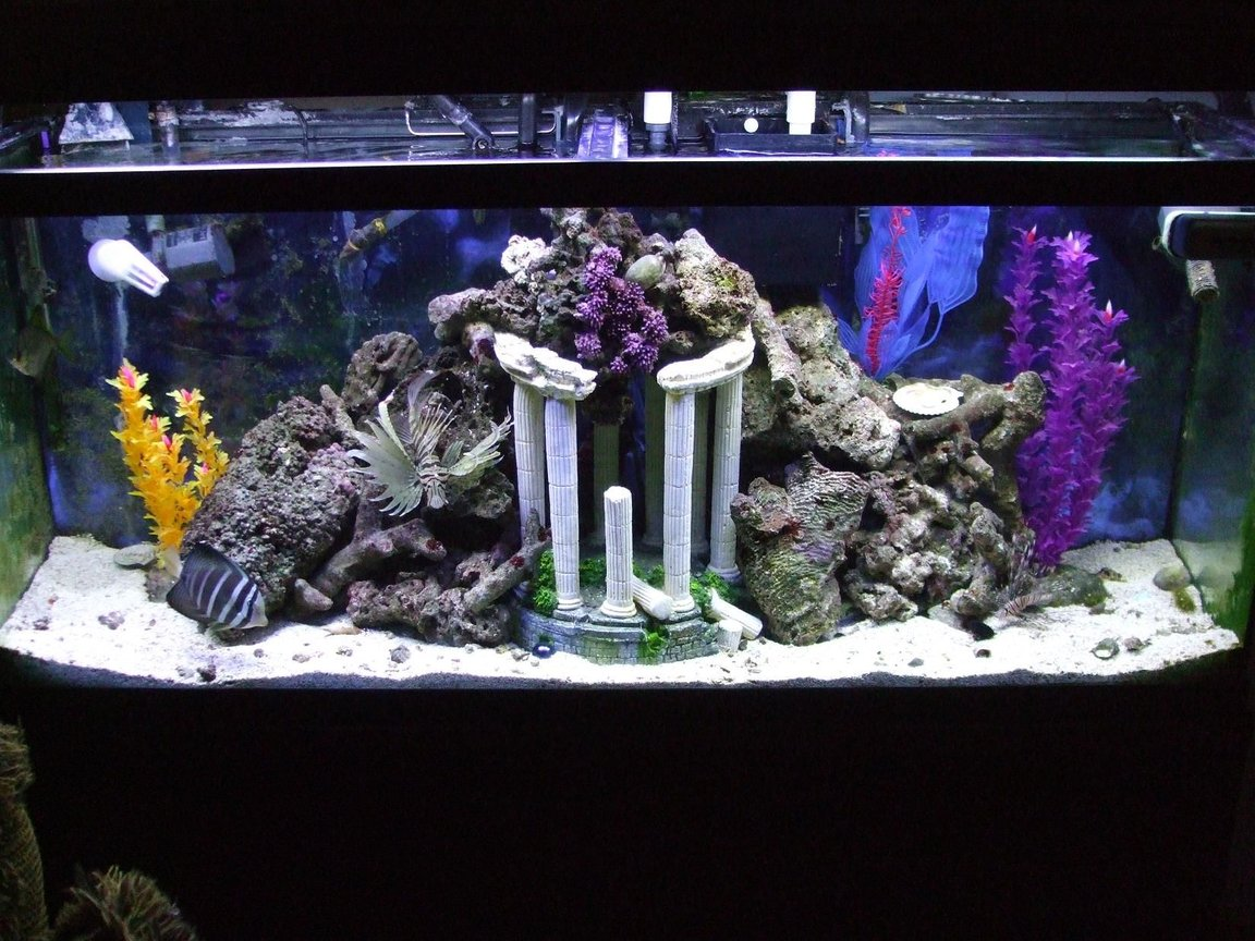 55 gallons saltwater fish tank (mostly fish, little/no live coral) - NFO