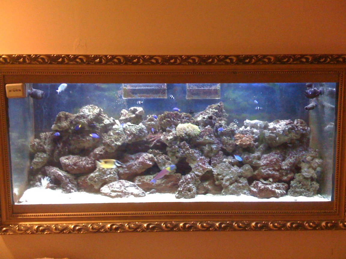 120 gallons saltwater fish tank (mostly fish, little/no live coral) - Over 60 pounds of live rock, several cheap fish and wonderful experience building my own fish tank. I have couch next to the mine fish tank. Takes only a few minutes to fall asleep. Mine filtration set up allowed me avoiding water change drastically. Multistage set up was created after many errors and adjustments. Thank you for taking your time and expressing your vote.