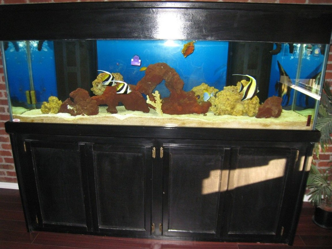 125 gallons saltwater fish tank (mostly fish, little/no live coral) - my 125