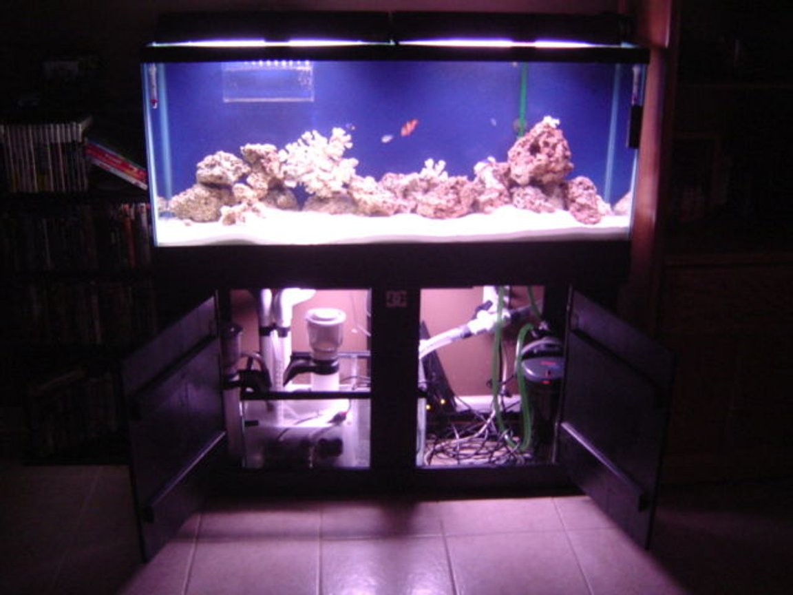 95 gallons saltwater fish tank (mostly fish, little/no live coral) - 55 gallon saltwater