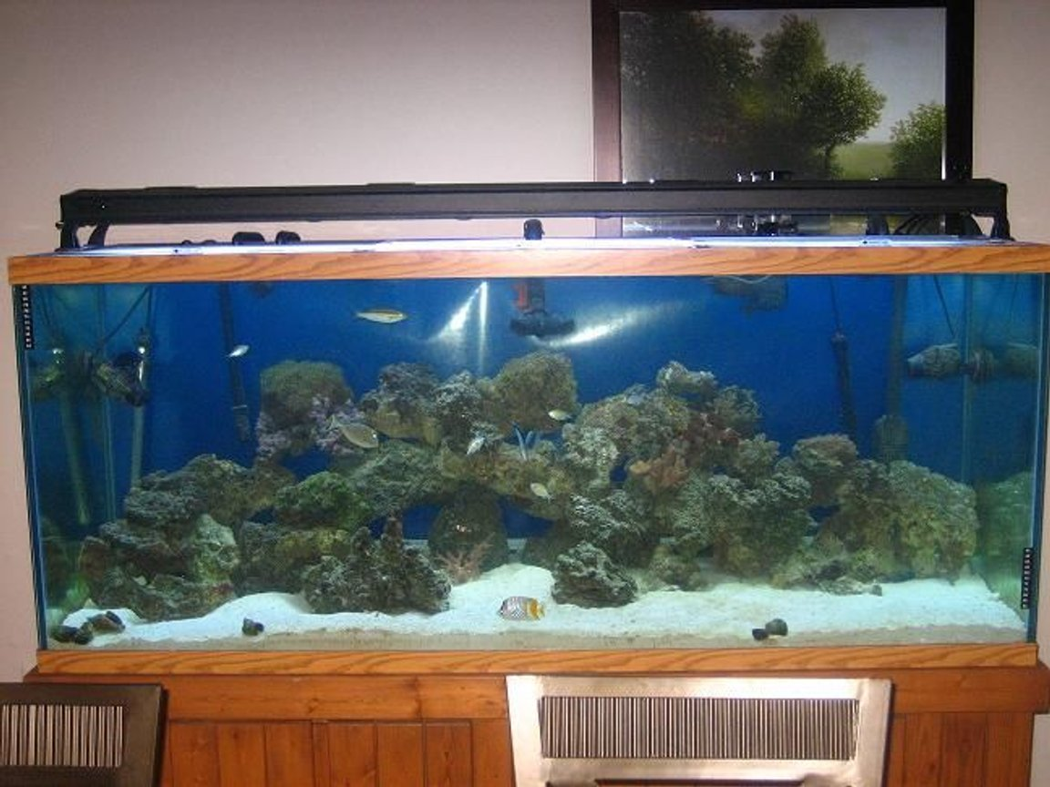 220 gallons saltwater fish tank (mostly fish, little/no live coral) - 220g