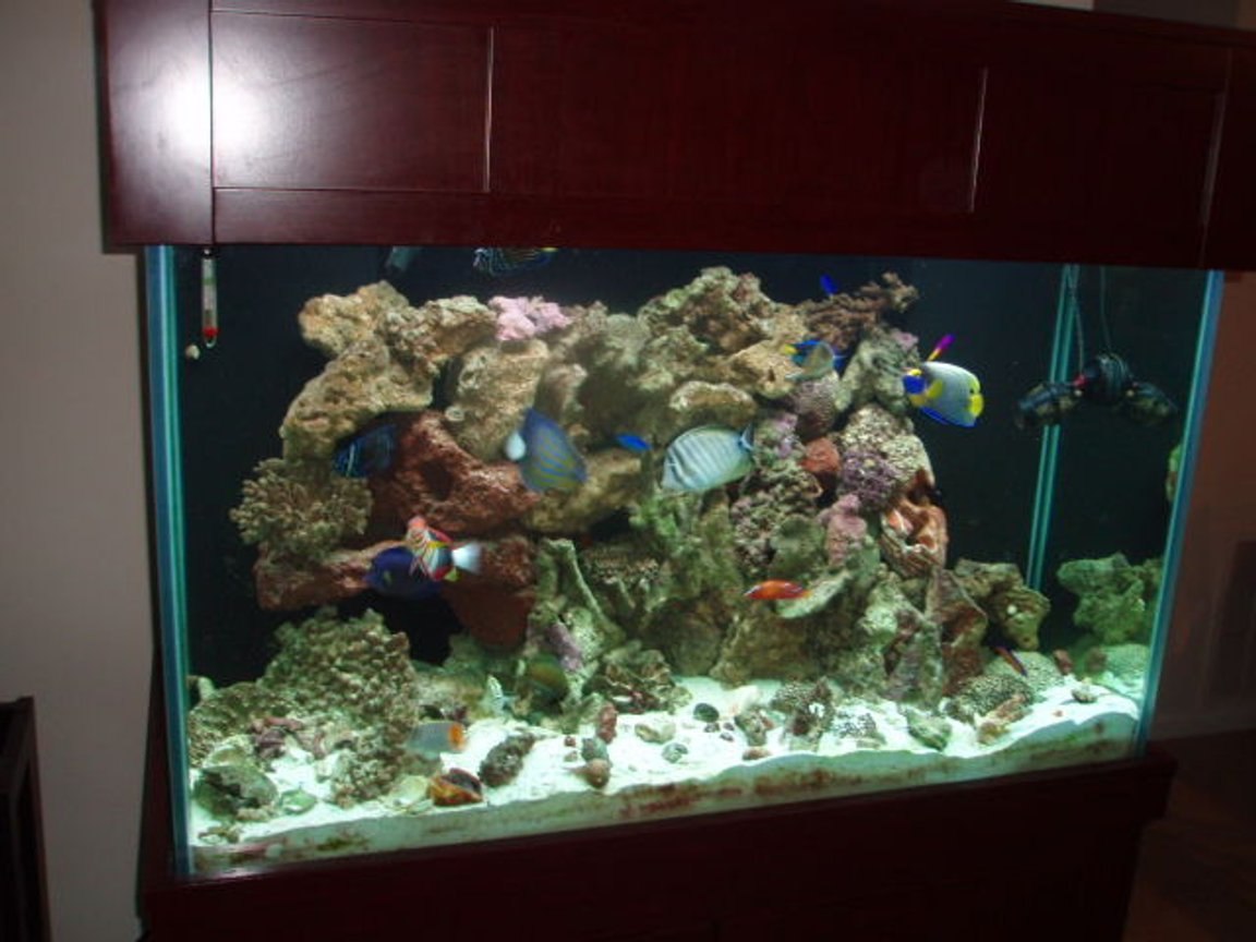 150 gallons saltwater fish tank (mostly fish, little/no live coral) - Angelic