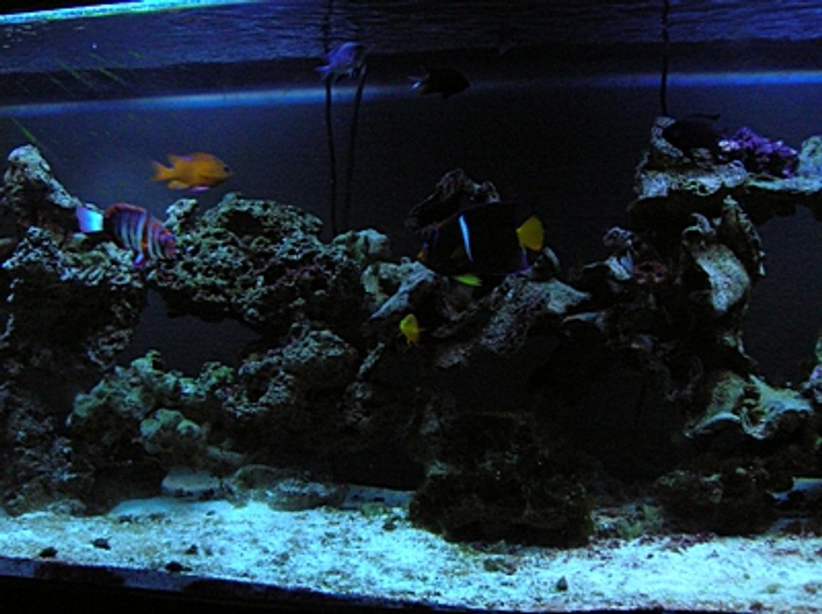 125 gallons saltwater fish tank (mostly fish, little/no live coral) - Majority of the Fish (Bad Picture)