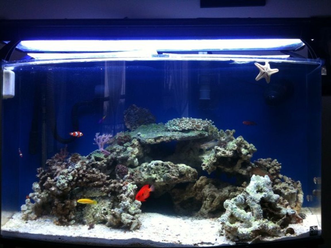 46 gallons saltwater fish tank (mostly fish, little/no live coral) - Front View of my 46 gallon bowfront 3 months old