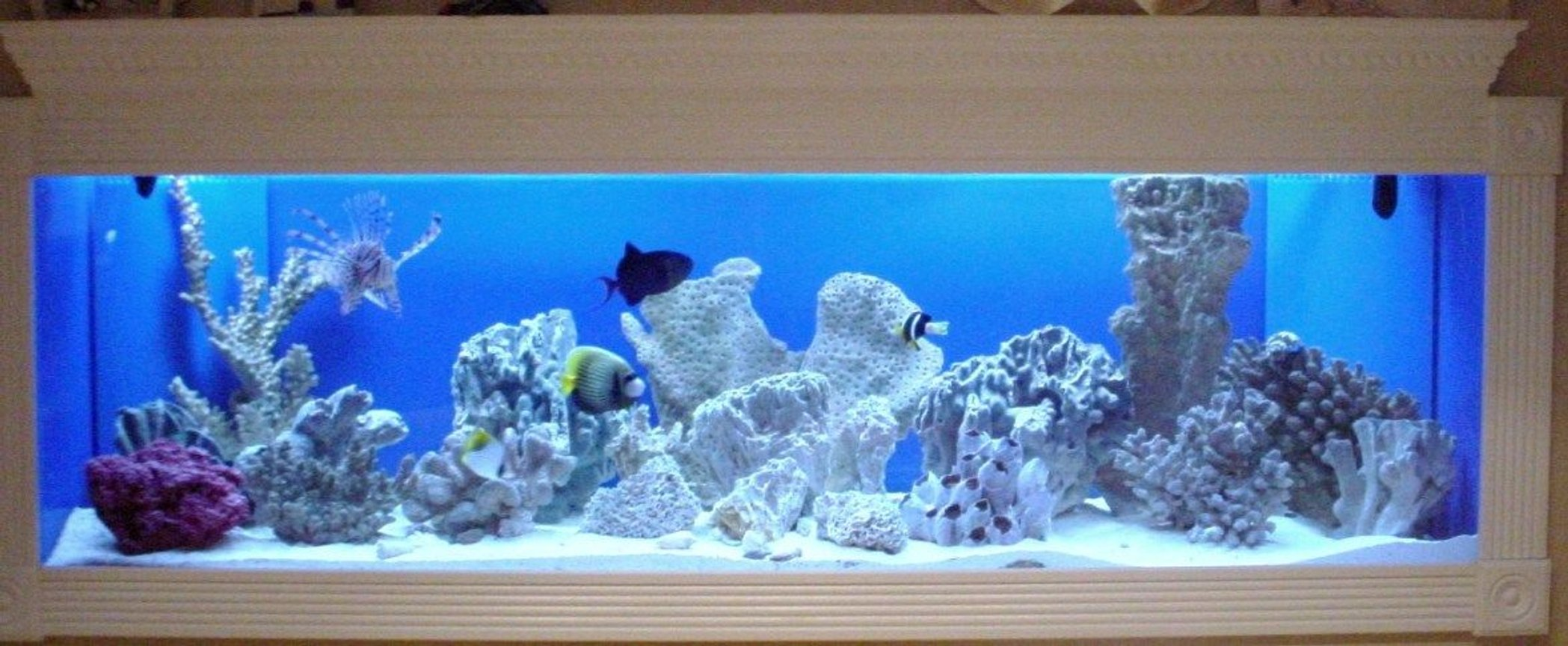 150 gallons saltwater fish tank (mostly fish, little/no live coral) - 150 Gallon FOWLR In Wall Saltwater Tank