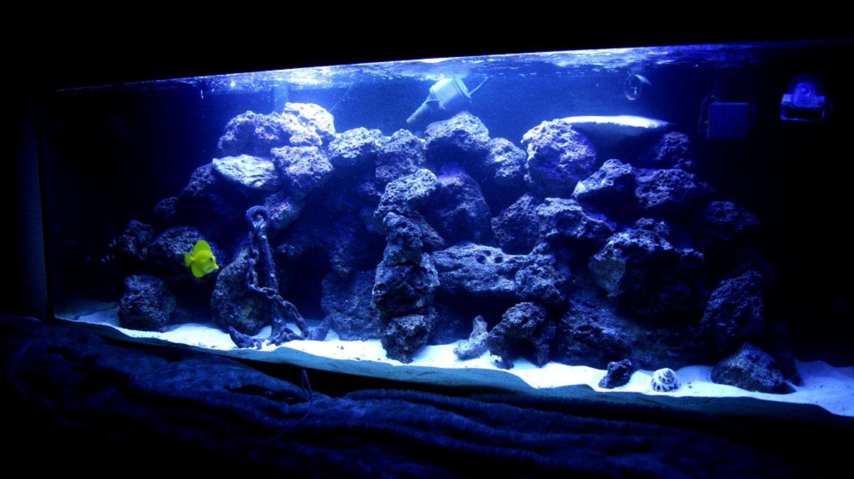 Photo #3 - 100 Gallon Reef Tank  Corals Consist Of Mushrooms