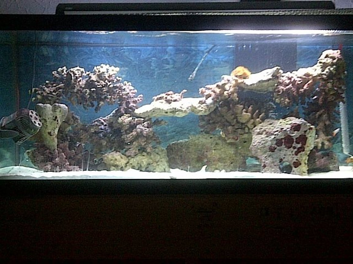 75 gallons saltwater fish tank (mostly fish, little/no live coral) - 75 gallon