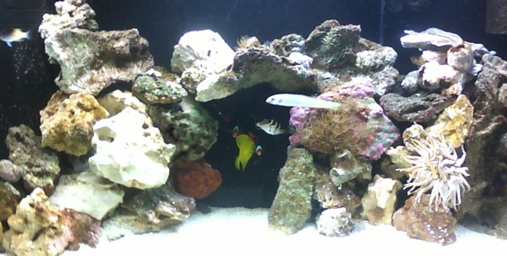 75 gallons saltwater fish tank (mostly fish, little/no live coral) - 75 flatback hex