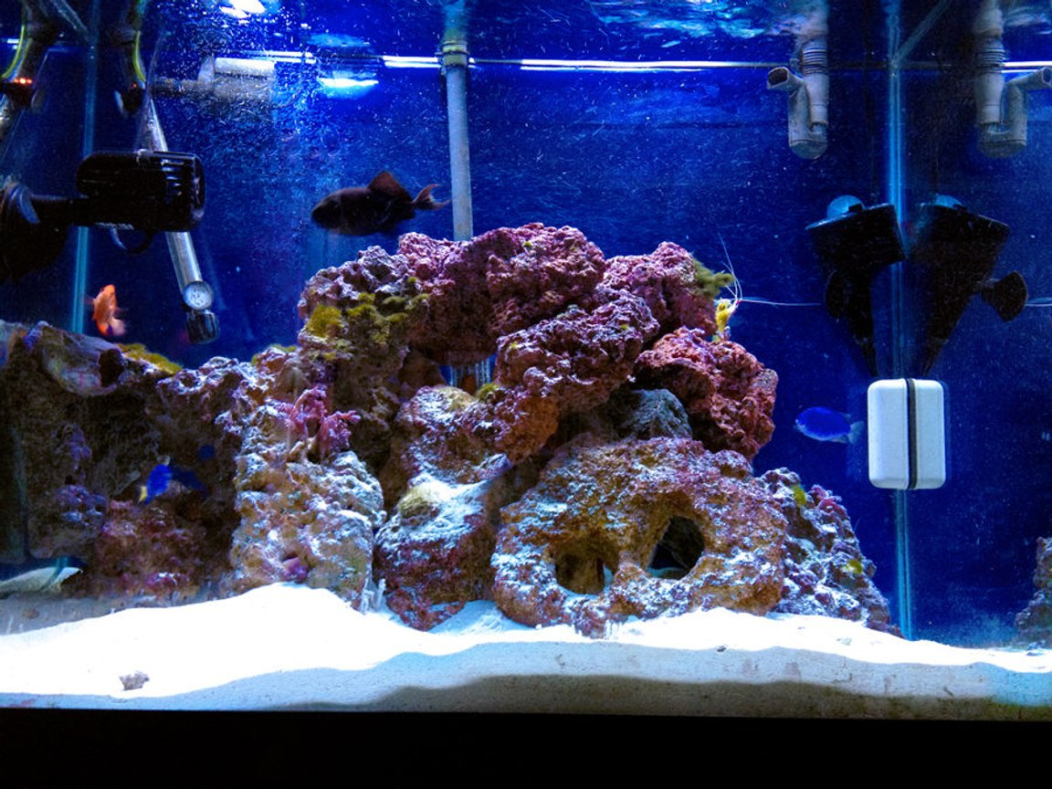 55 gallons saltwater fish tank (mostly fish, little/no live coral) - My 55 Gallon Tank