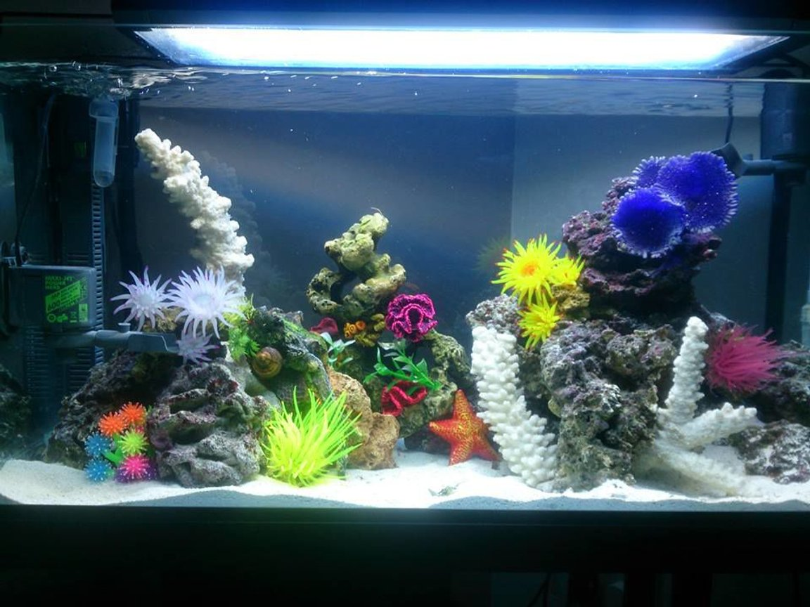 35 gallons saltwater fish tank (mostly fish, little/no live coral) - 30 Gallon FOWLR Tank