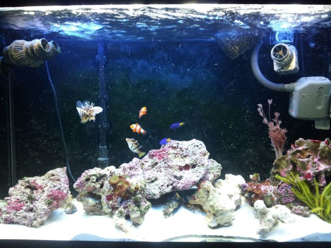 90 gallons saltwater fish tank (mostly fish, little/no live coral) - Another of the tank
