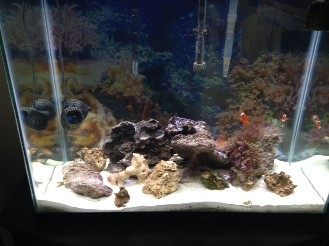 56 gallons saltwater fish tank (mostly fish, little/no live coral) - My tank