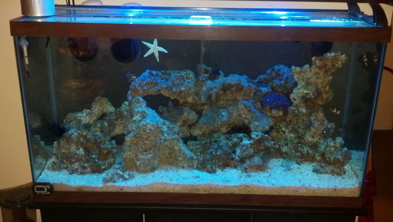 40 gallons saltwater fish tank (mostly fish, little/no live coral) - tank
