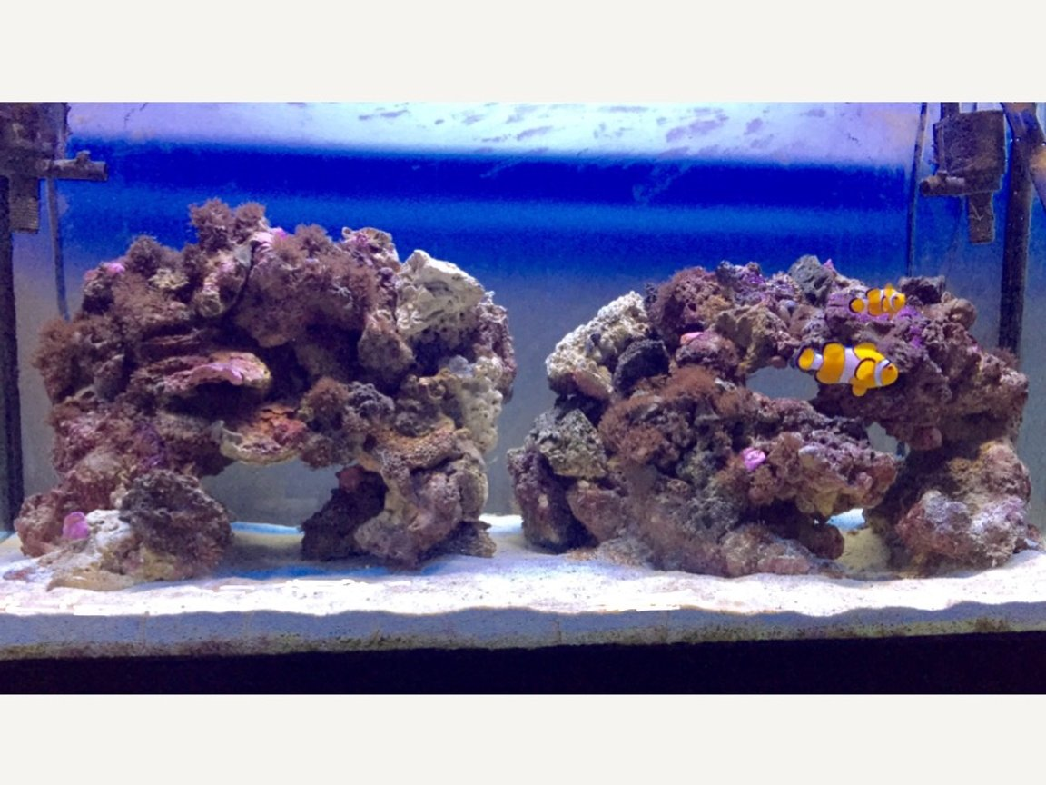 46 gallons saltwater fish tank (mostly fish, little/no live coral) - My 2 clowns