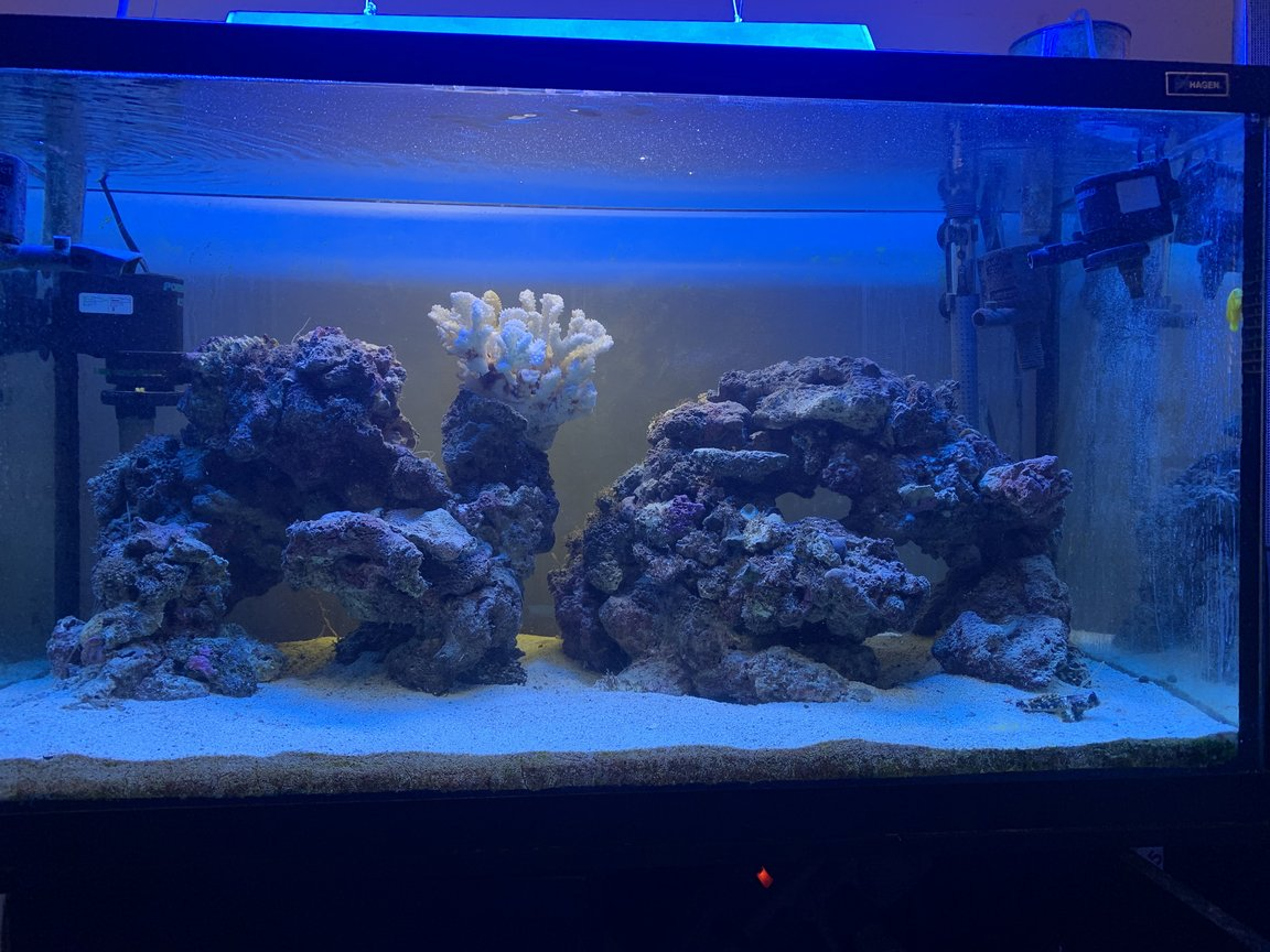 46 gallons saltwater fish tank (mostly fish, little/no live coral) - My 50 gallon tank