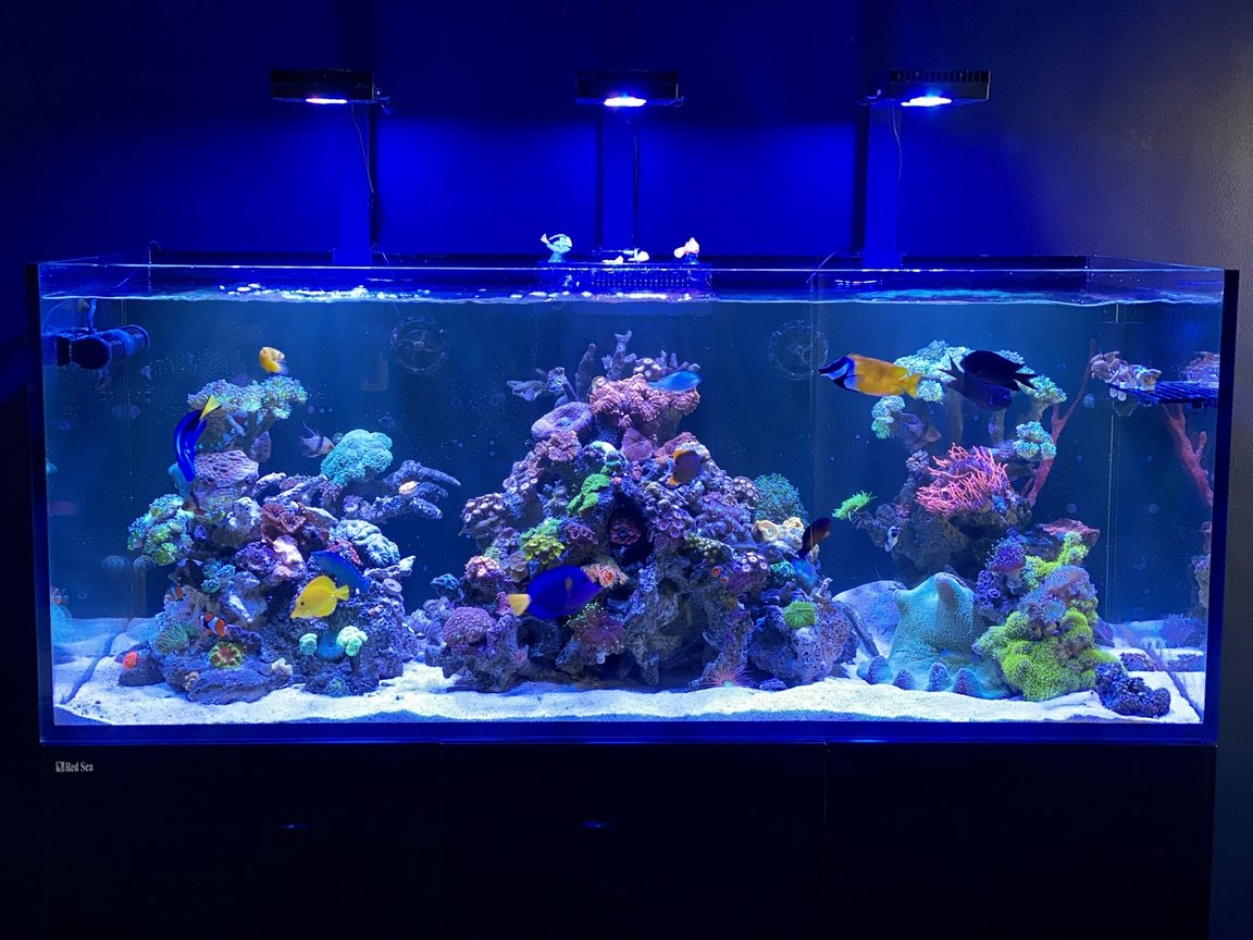 165 gallons saltwater fish tank (mostly fish, little/no live coral) - Reef wonders