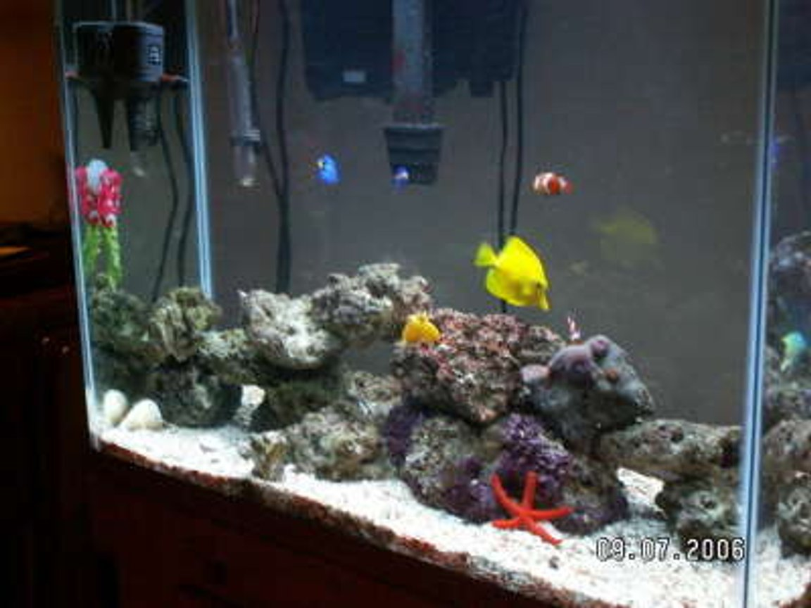37 gallons saltwater fish tank (mostly fish, little/no live coral) - NA