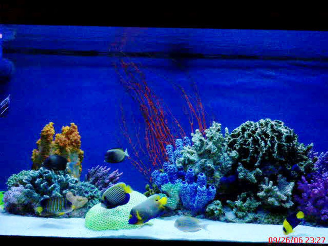 150 gallons saltwater fish tank (mostly fish, little/no live coral) - 150 ga. tank