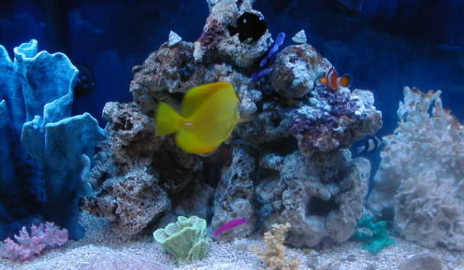 53 gallons saltwater fish tank (mostly fish, little/no live coral) - Saltwater Center of Life!