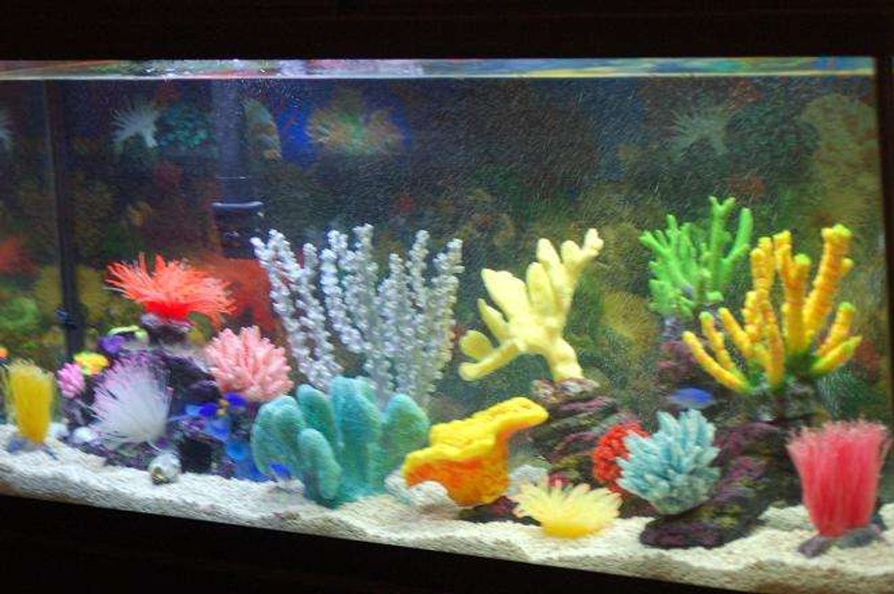 55 gallons saltwater fish tank (mostly fish, little/no live coral) - Better Picture of My tank