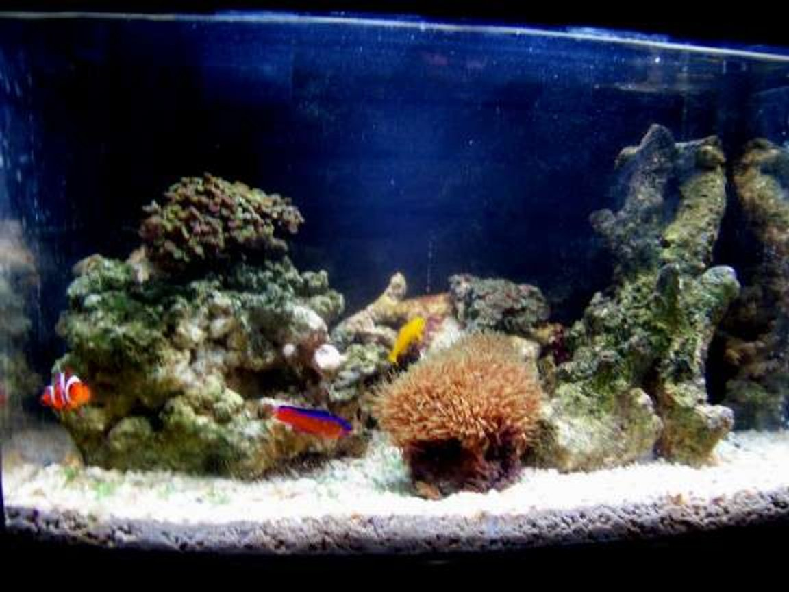 5 gallons saltwater fish tank (mostly fish, little/no live coral) - my 5 gallon updated