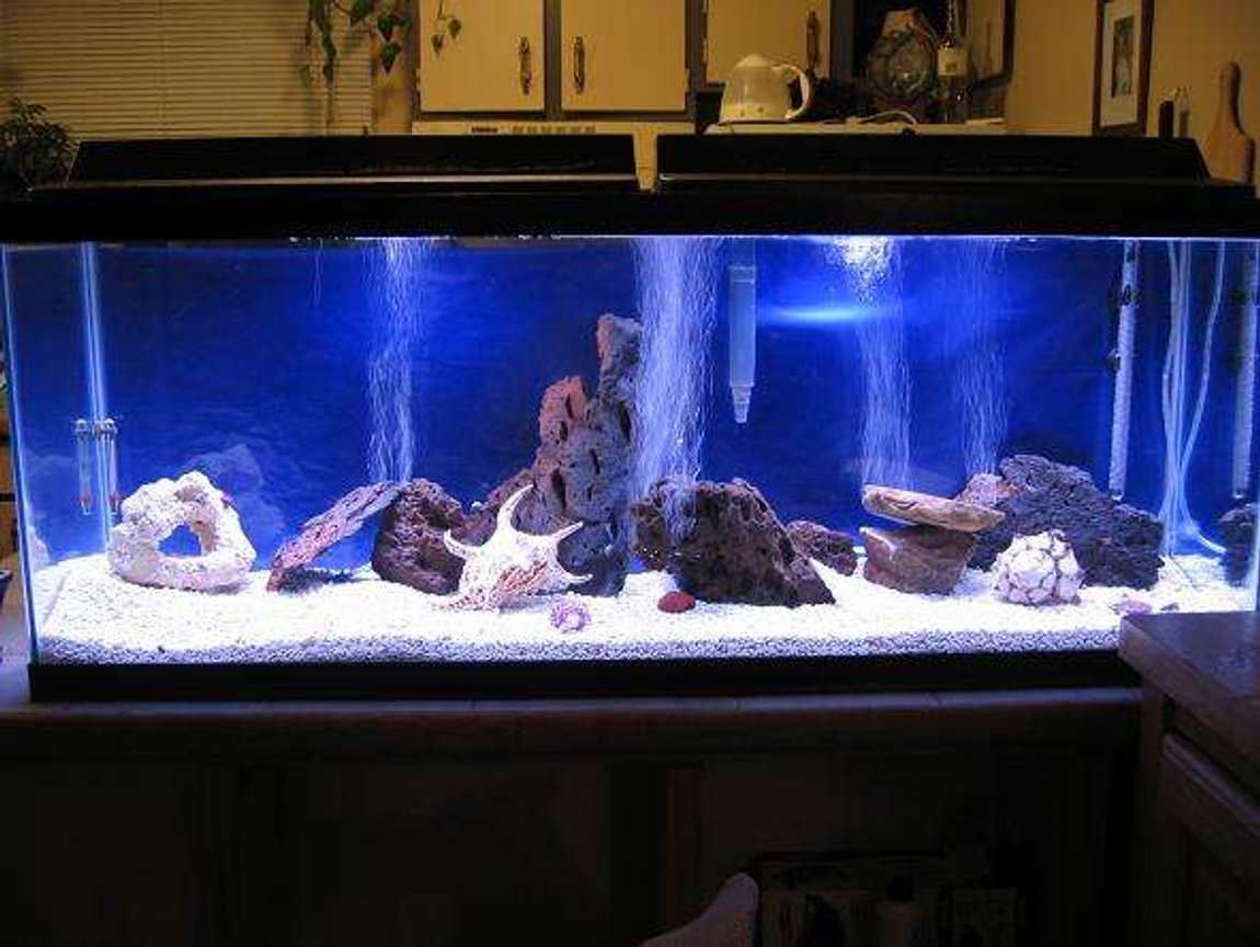 30 gallons saltwater fish tank (mostly fish, little/no live coral) - 50 gal salt after first 5 weeks, no fish yet