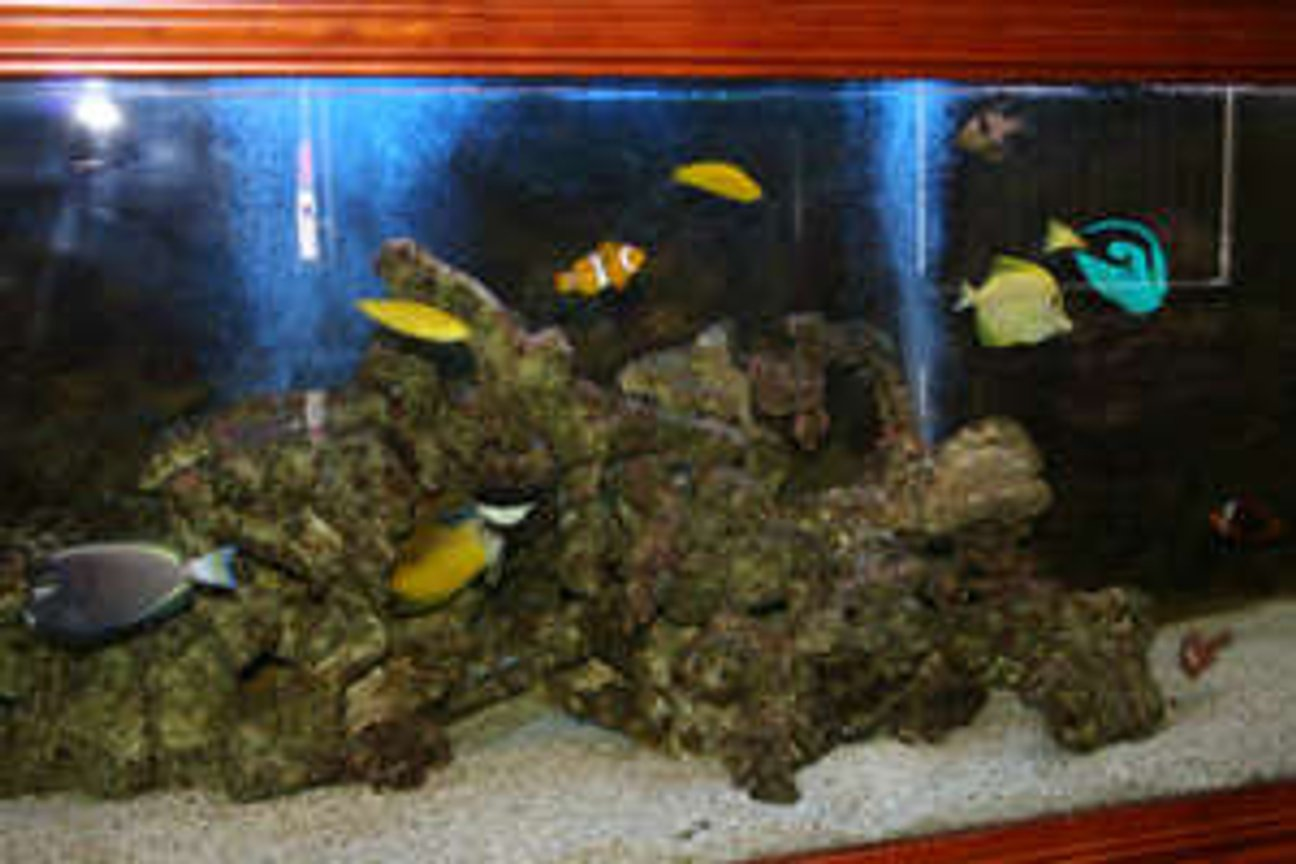 600 gallons saltwater fish tank (mostly fish, little/no live coral) - 6x2x2 community fish tank