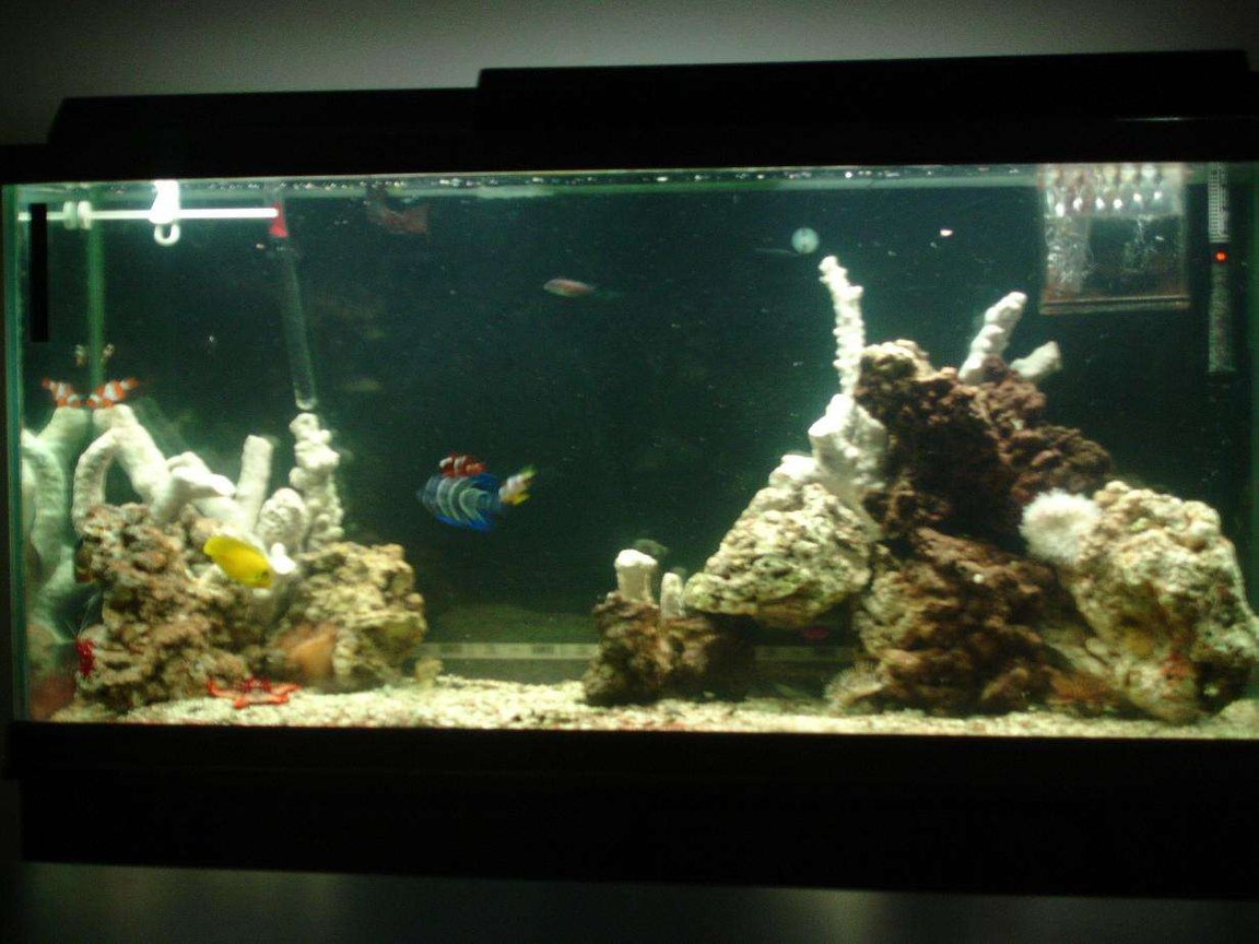60 gallons saltwater fish tank (mostly fish, little/no live coral) - thats new branch rock, can't wait till it turns colors