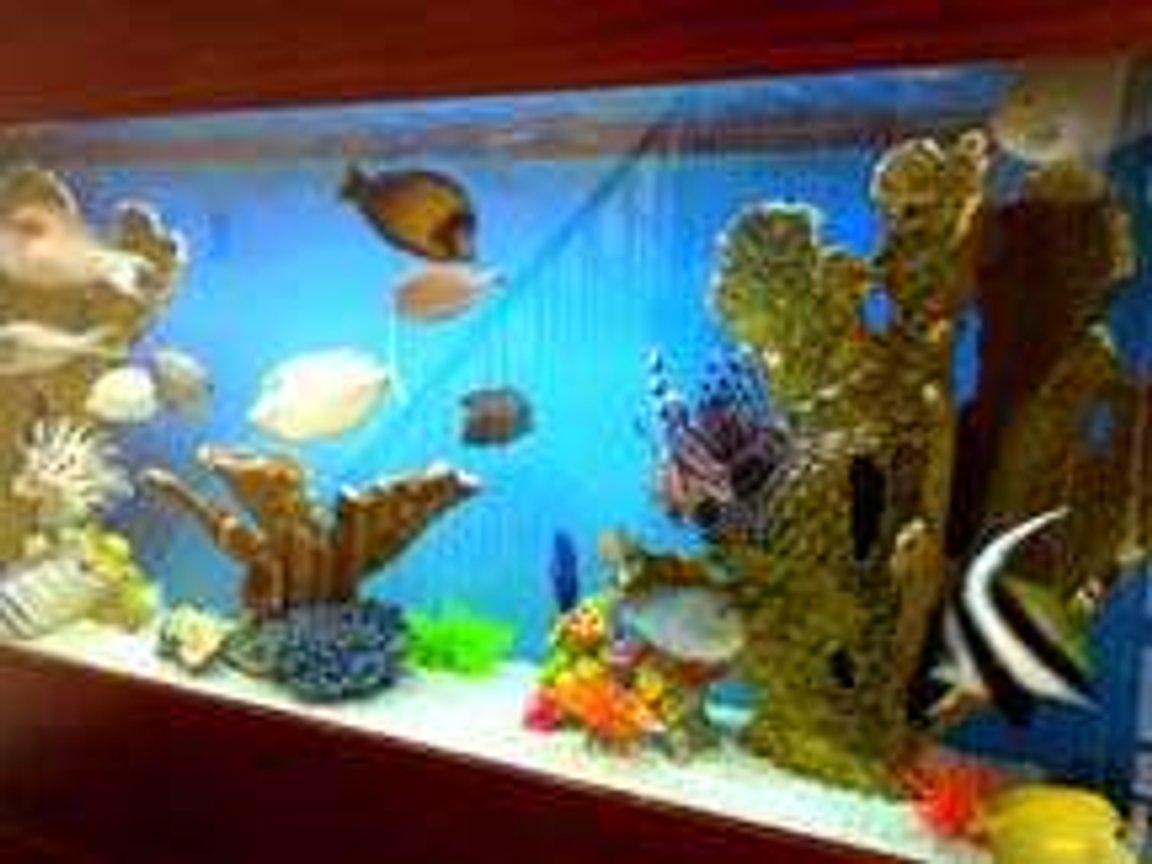 250 gallons saltwater fish tank (mostly fish, little/no live coral) - Consists mostly of tangs & a pair of lionfish.