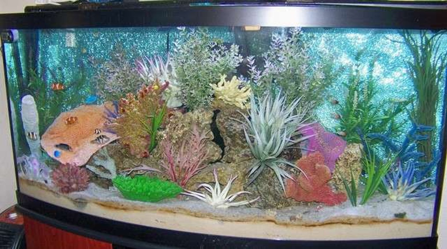 72 gallons saltwater fish tank (mostly fish, little/no live coral) - 72 Bow Front FOWLER