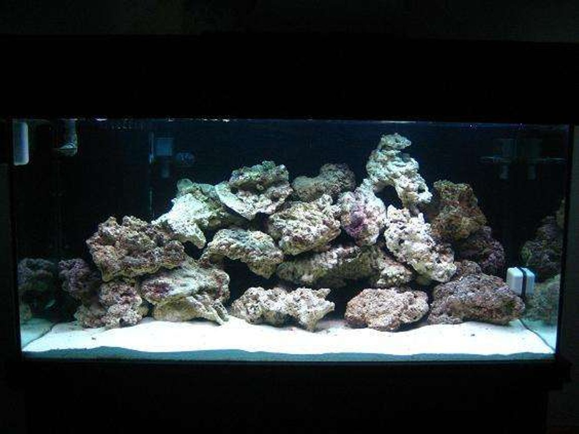 55 gallons saltwater fish tank (mostly fish, little/no live coral) - 120 DAS tank under construction......