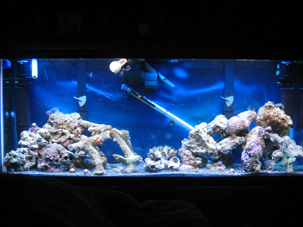 55 gallons saltwater fish tank (mostly fish, little/no live coral) - Recent Pic