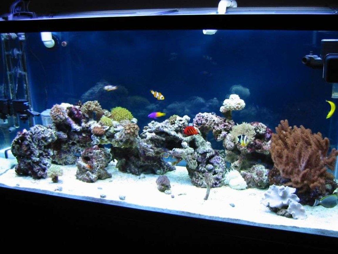 90 gallons saltwater fish tank (mostly fish, little/no live coral) - My new tank with little corals and some fishes