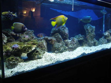 90 gallons saltwater fish tank (mostly fish, little/no live coral) - old pic of 125 no longer have it!! 90 set up now waiting to get a good pic