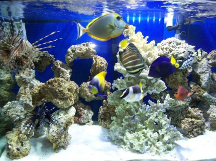 Rated #9: 90 Gallons Saltwater Fish Tank - my tank
