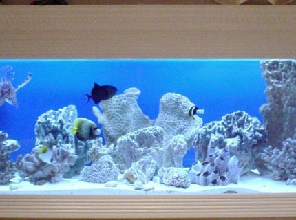 Rated #2: 150 Gallons Saltwater Fish Tank - 150 Gallon FOWLR In Wall Saltwater Tank