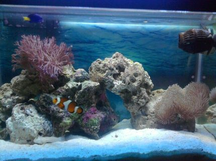 Rated #7: 10 Gallons Saltwater Fish Tank - My tank
