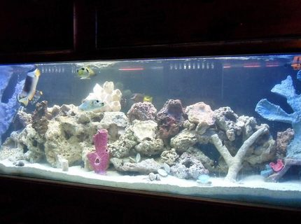 Rated #8: 125 Gallons Saltwater Fish Tank - my 125 fish tank with 45 gallon sump