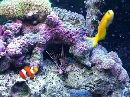 Rated #2: 37 Gallons Saltwater Fish Tank - My kids