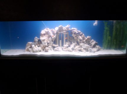 140 gallons saltwater fish tank (mostly fish, little/no live coral) - Our monster tank. Enjoy!